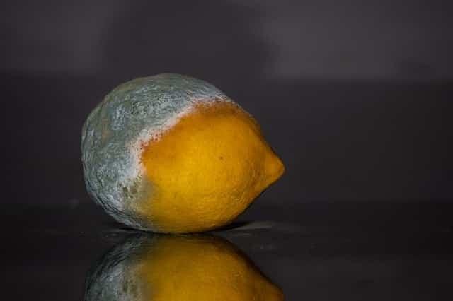 Schimmlige Zitrone