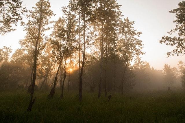 Schwüle Luft in einem Wald